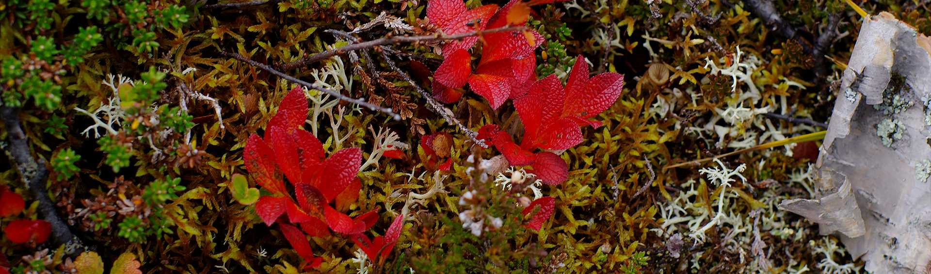 Mountain herbs and plants with autumn colours